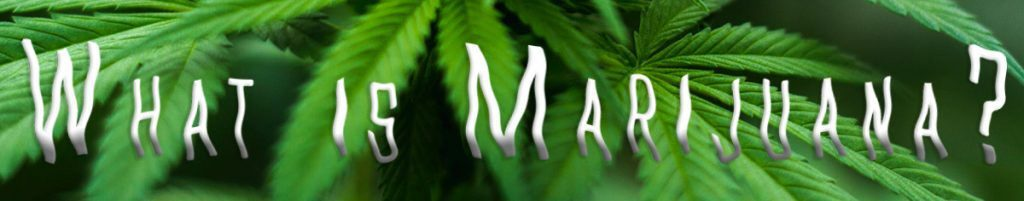 How to Recover from Marijuana Addiction